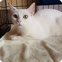 Adopt A Pet :: Abigail - Umatilla, FL