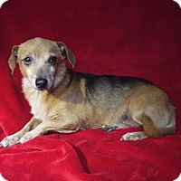 Adopt A Pet :: Dolly - Batesville, AR