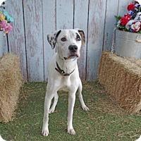 Adopt A Pet :: Dante - Tampa, FL