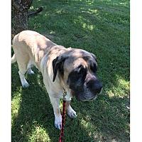 Adopt A Pet :: FRISBEE - LaGrange, KY