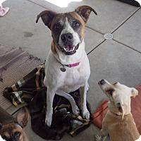 Adopt A Pet :: Kaydee - Quail Valley, CA