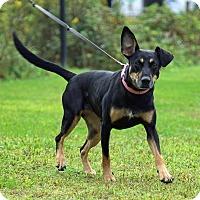 Adopt A Pet :: Becca Paws - Breinigsville, PA
