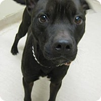 Adopt A Pet :: Dallas - Gary, IN