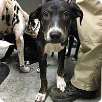Adopt A Pet :: Parker - Paducah, KY