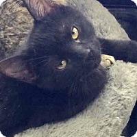 Adopt A Pet :: Jackie - Hamilton, ON