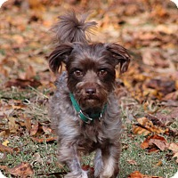 Adopt A Pet :: Rusty - Prince Frederick, MD