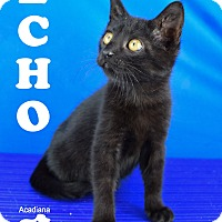 Adopt A Pet :: Echo - Carencro, LA