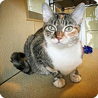 Adopt A Pet :: Stacy - Fredericksburg, TX