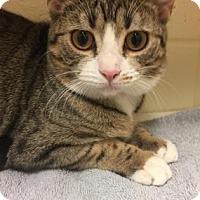 Adopt A Pet :: Charlotte - Cumming, GA