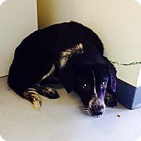 Adopt A Pet :: Allanah - Poughkeepsie, NY
