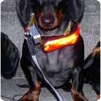 Adopt A Pet :: Liam - San Jose, CA
