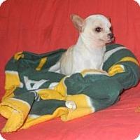 Adopt A Pet :: Tequilla 4.5 LBS - APPLEHEAD - Antioch, IL