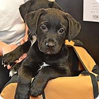 Adopt A Pet :: Kai - Marietta, GA