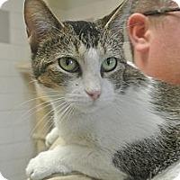 Adopt A Pet :: Snow - white settlment, TX