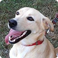 Adopt A Pet :: *Candy - PENDING - Westport, CT