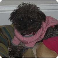 Adopt A Pet :: KoKo - Rescue, CA