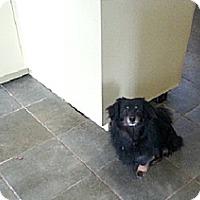 Adopt A Pet :: Rorie - Freeport, NY