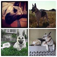 Adopt A Pet :: Lana - San Diego, CA