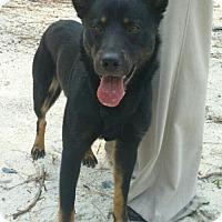 Adopt A Pet :: Jim Bob - Morrisville, NC