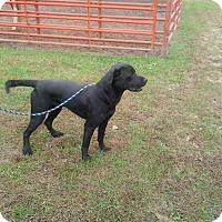 Adopt A Pet :: BooBoo Bear - Germantown, MD