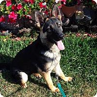 Adopt A Pet :: Mika - Irvine, CA