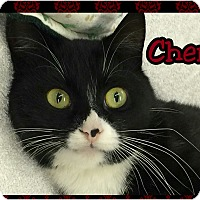 Adopt A Pet :: Cheri - Atco, NJ