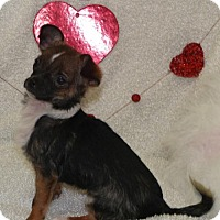 Adopt A Pet :: Olive - REDDING, CA