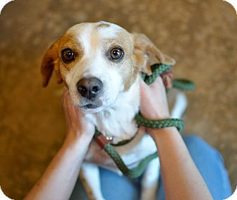 Beagle Mix Dog for adoption in Tanner, Alabama - Louise