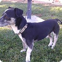 Adopt A Pet :: Herman - Las Vegas, NV