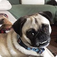 Adopt A Pet :: Max - Playa Del Rey, CA