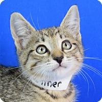Adopt A Pet :: Conner - Carencro, LA