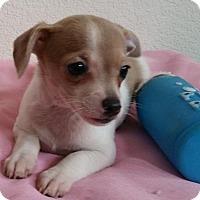 Adopt A Pet :: Jasmine - Stockton, CA