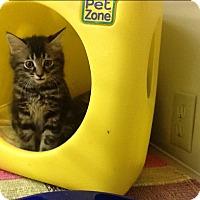 Adopt A Pet :: Charity - Warren, OH