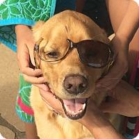 Adopt A Pet :: Sammy (COURTESY POST) - East Smithfield, PA