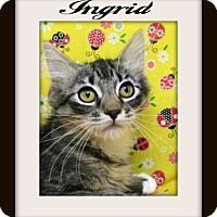 Adopt A Pet :: Ingrid - Tracy, CA