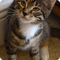 Adopt A Pet :: Bonnie - Island Park, NY