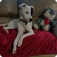 Adopt A Pet :: Harry - Hazlet, NJ