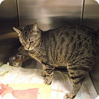 Adopt A Pet :: Turtle - Chambersburg, PA