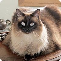 Adopt A Pet :: Ren - Grinnell, IA