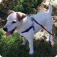 Adopt A Pet :: Frasier in Dallas - Austin, TX