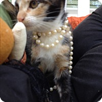 Adopt A Pet :: Rita Hayworth - Statesville, NC