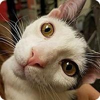 Adopt A Pet :: Aflalfa (Big Hugger!) - San Diego, CA
