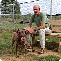 Adopt A Pet :: Doolittle-Prison Graduate - Elyria, OH