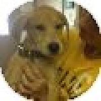 Adopt A Pet :: Pickles - Denver, CO