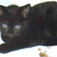 Adopt A Pet :: Austin - Lake Charles, LA