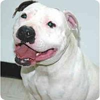 Adopt A Pet :: Winnie - Port Washington, NY