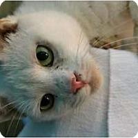 Adopt A Pet :: Pinky - McKinney, TX