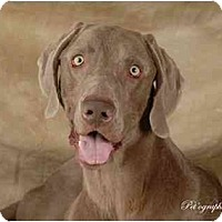 Adopt A Pet :: HUNTER - Las Vegas, NV