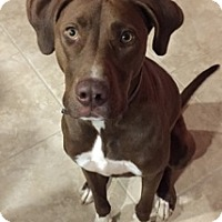 Adopt A Pet :: Chazz - Tracy, CA