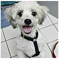 Adopt A Pet :: Serina - Forked River, NJ